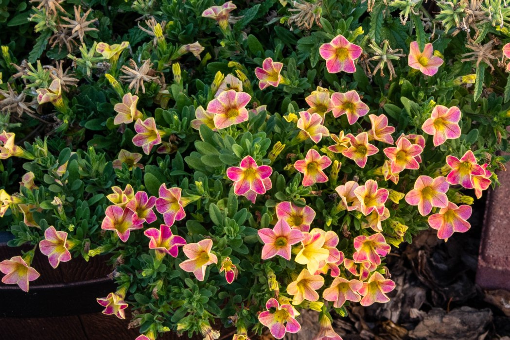 Last Flowers of Summer