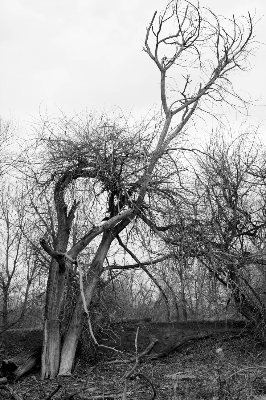 Winter Tree (B&W)